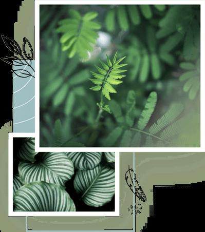 plant-collage
