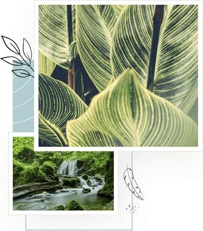 plant-river-collage