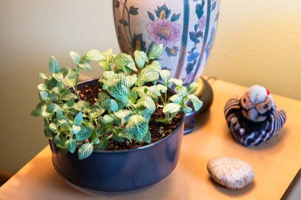plant-rock-lamp-bird-decorations-on-table